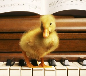 Duck playing piano